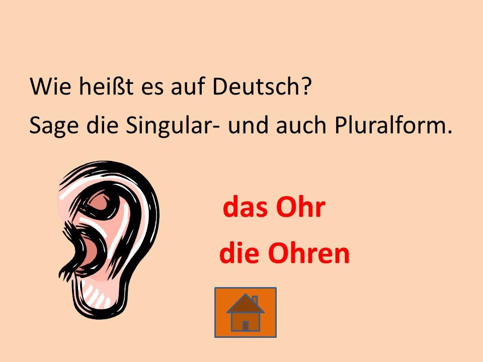 Wie heißt es auf Deutsch? Sage die Singular- und auch Pluralform. das Ohr die Ohren