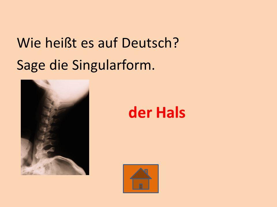 Wie heißt es auf Deutsch? Sage die Singularform. der Hals