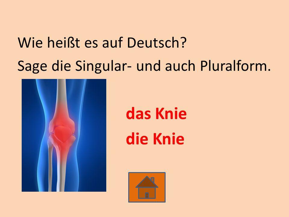 Wie heißt es auf Deutsch? Sage die Singular- und auch Pluralform. das Knie die Knie
