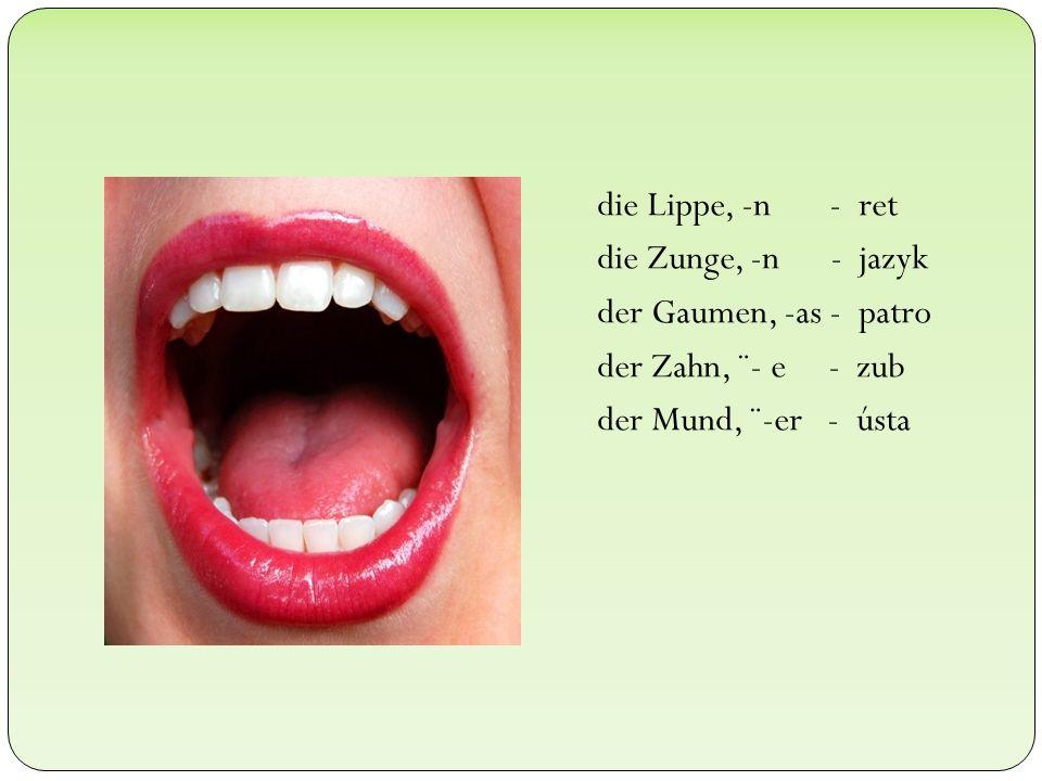 die Lippe, -n - ret die Zunge, -n - jazyk der Gaumen, -as - patro der Zahn, ¨- e - zub der Mund, ¨-er - ústa