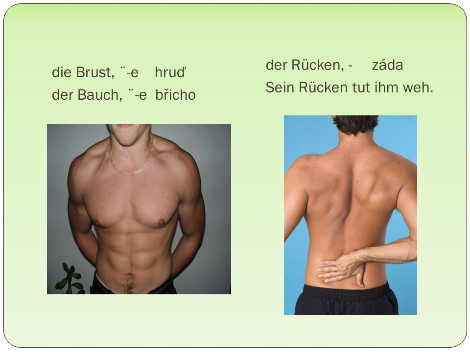die Brust, ¨-e hruď der Bauch, ¨-e břicho der Rücken, - záda Sein Rücken tut ihm weh.