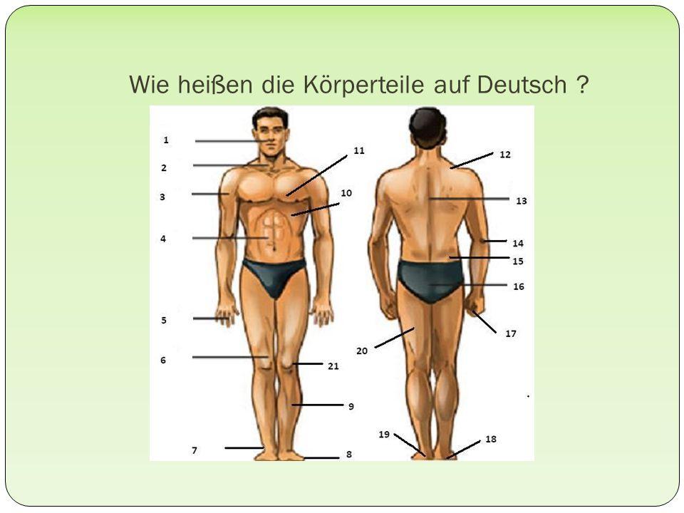 Wie heißen die Körperteile auf Deutsch