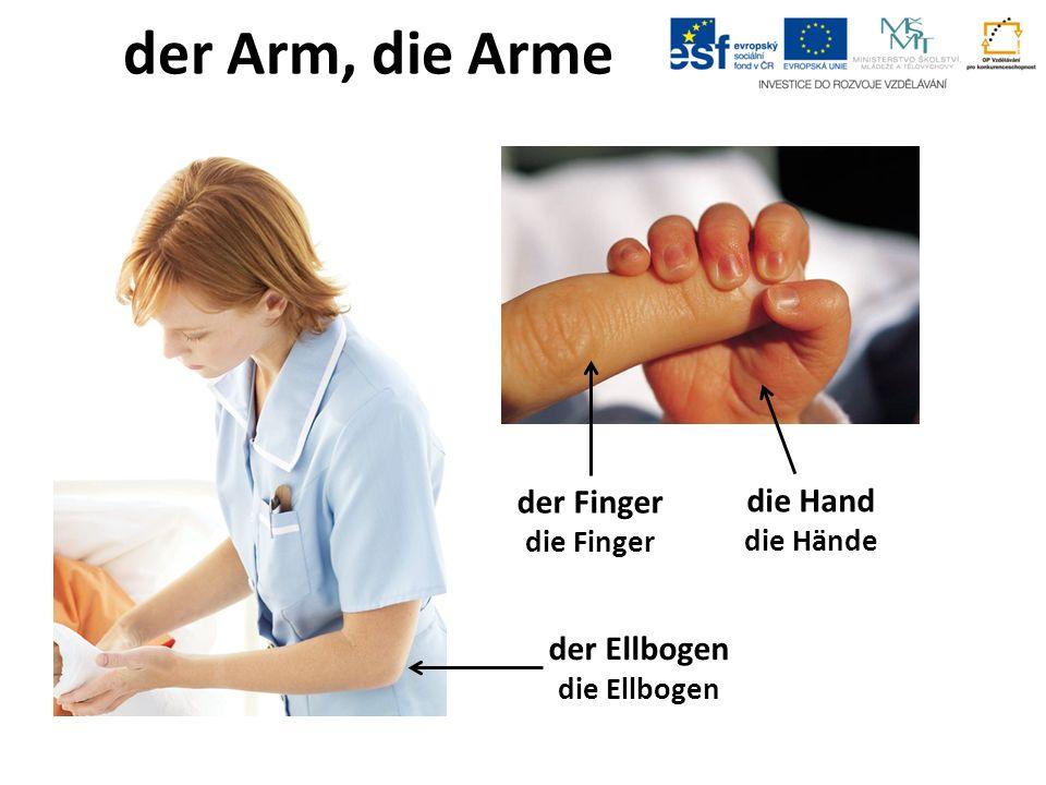 der Arm, die Arme der Finger die Finger die Hand die Hände der Ellbogen die Ellbogen