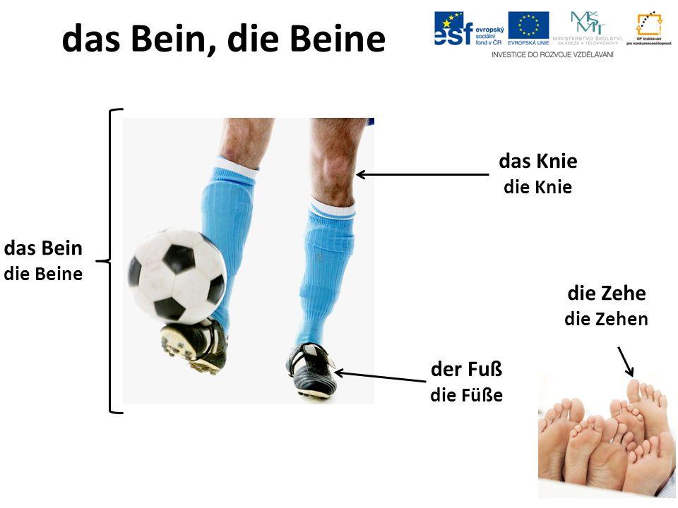 das Bein, die Beine das Knie die Knie die Zehe die Zehen das Bein die Beine der Fuß die Füße