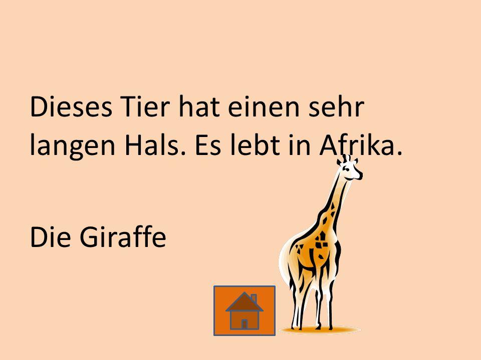 Dieses Tier hat einen sehr langen Hals. Es lebt in Afrika. Die Giraffe