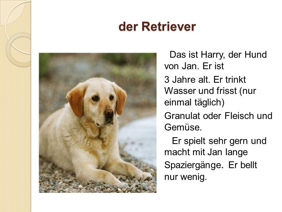 der Retriever Das ist Harry, der Hund von Jan. Er ist 3 Jahre alt.