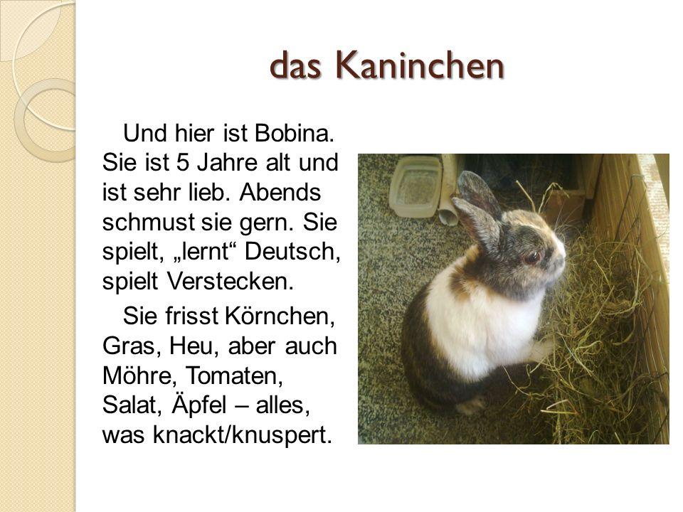 das Kaninchen Und hier ist Bobina. Sie ist 5 Jahre alt und ist sehr lieb.