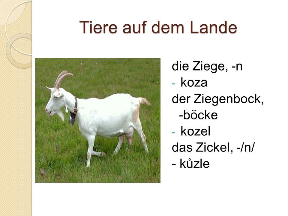 Tiere auf dem Lande die Ziege, -n - koza der Ziegenbock, -böcke - kozel das Zickel, -/n/ - kůzle