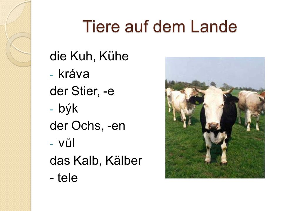 Tiere auf dem Lande die Kuh, Kühe - kráva der Stier, -e - býk der Ochs, -en - vůl das Kalb, Kälber - tele