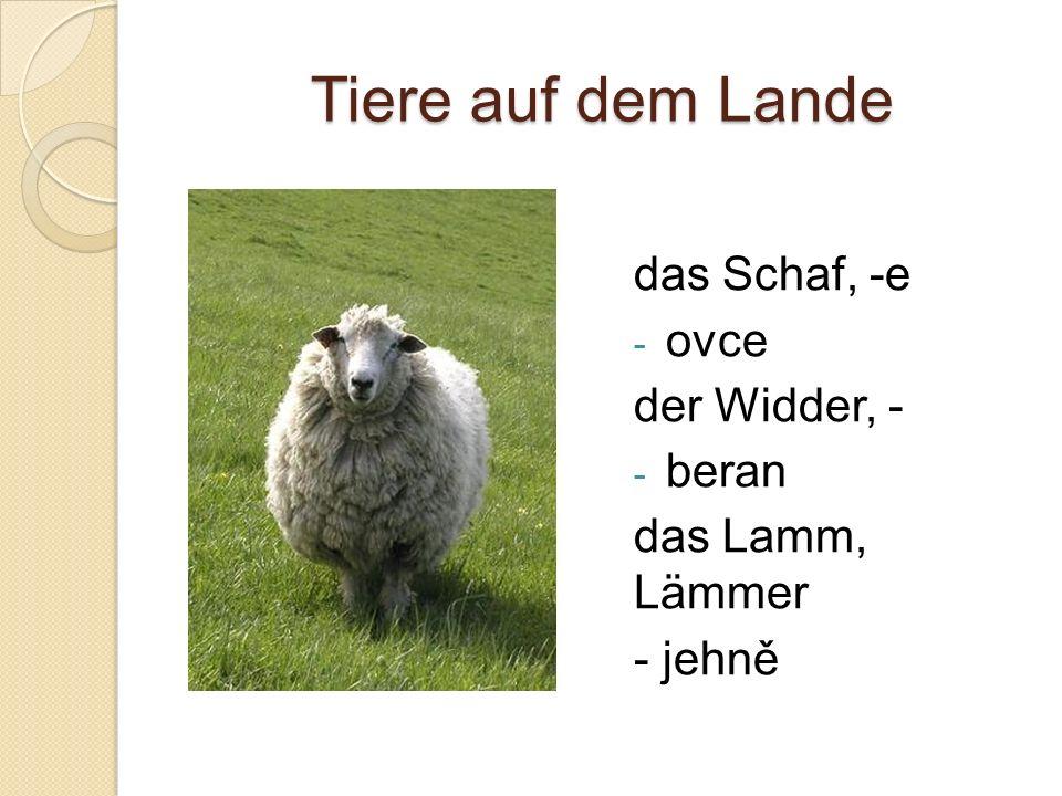Tiere auf dem Lande das Schaf, -e - ovce der Widder, - - beran das Lamm, Lämmer - jehně