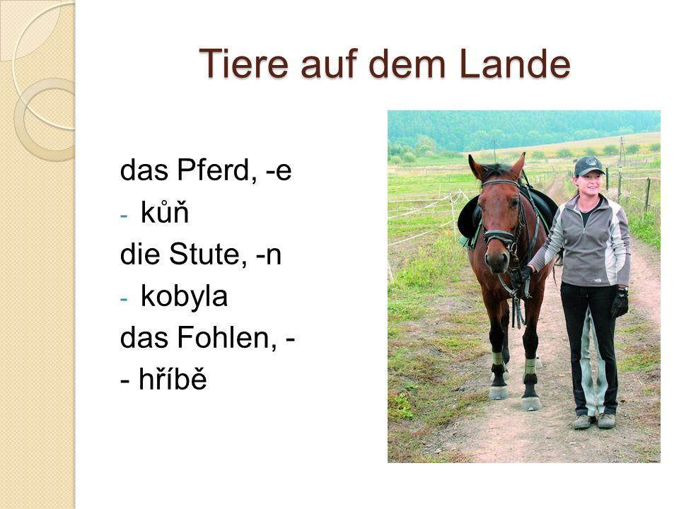 Tiere auf dem Lande das Pferd, -e - kůň die Stute, -n - kobyla das Fohlen, - - hříbě