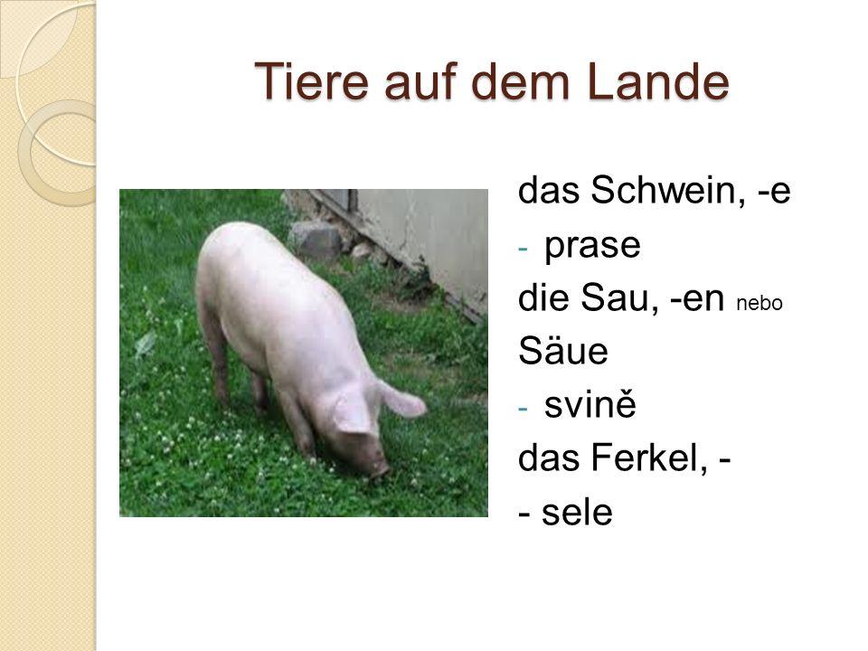 Tiere auf dem Lande das Schwein, -e - prase die Sau, -en nebo Säue - svině das Ferkel, - - sele