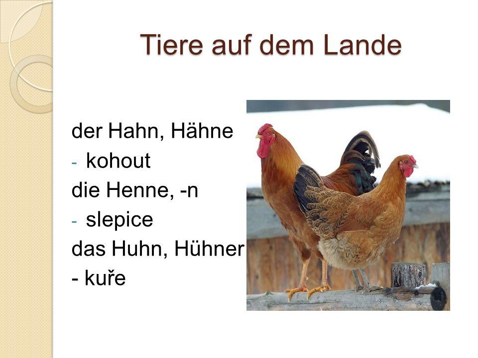 Tiere auf dem Lande der Hahn, Hähne - kohout die Henne, -n - slepice das Huhn, Hühner - kuře