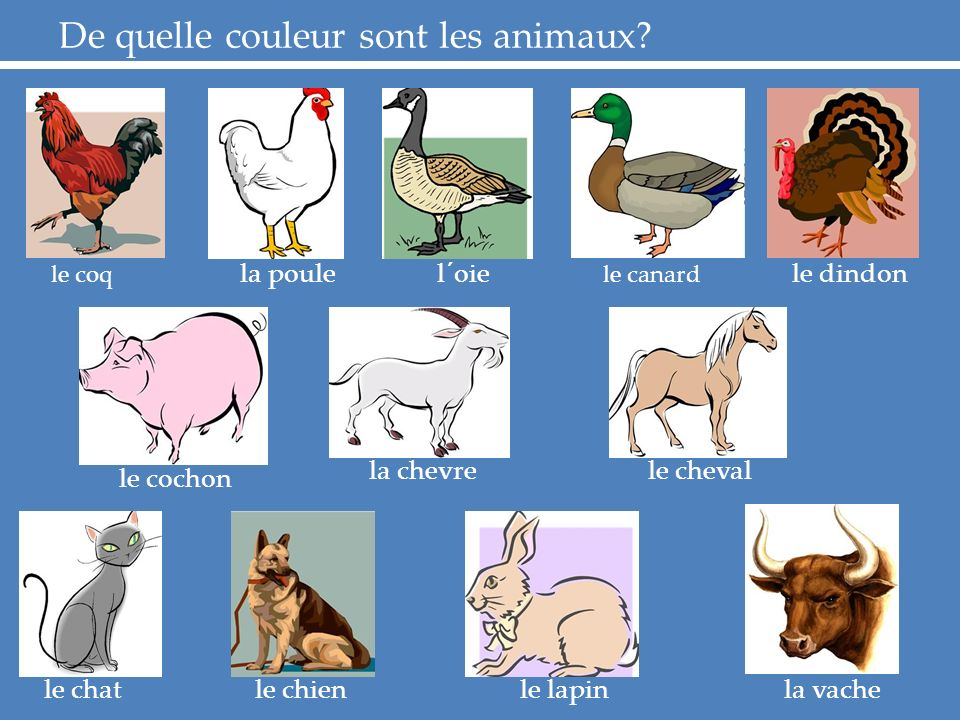 De quelle couleur sont les animaux.