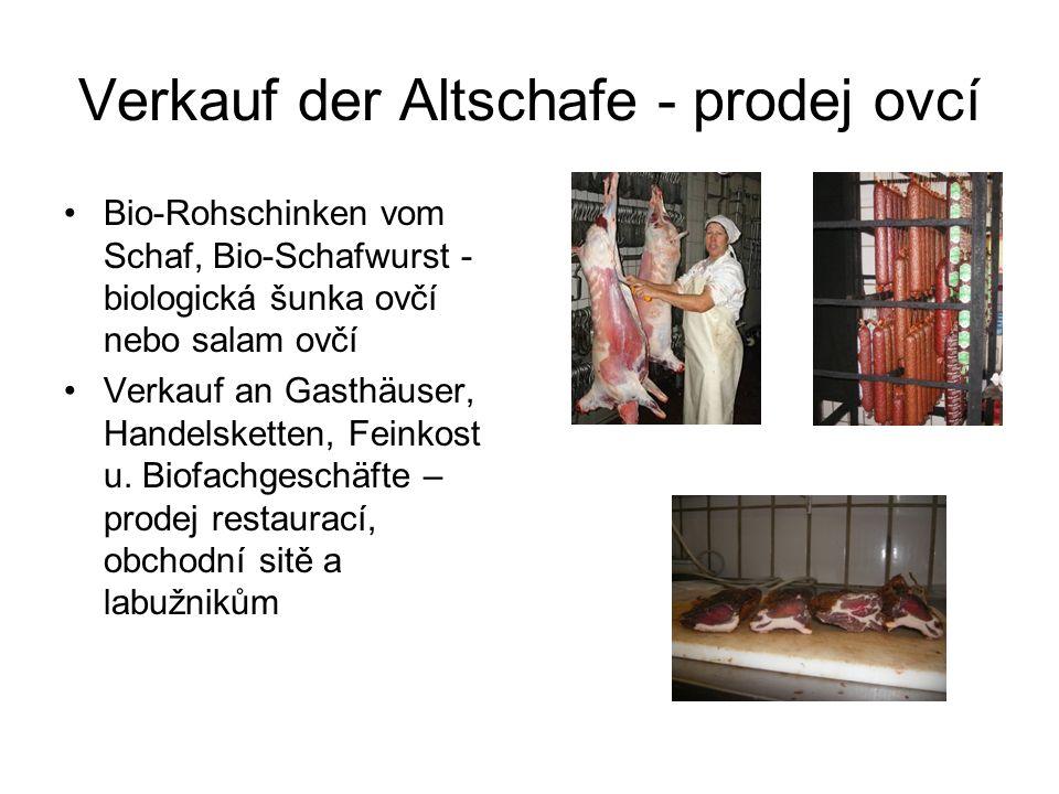 Verkauf der Altschafe - prodej ovcí Bio-Rohschinken vom Schaf, Bio-Schafwurst - biologická šunka ovčí nebo salam ovčí Verkauf an Gasthäuser, Handelsketten, Feinkost u.