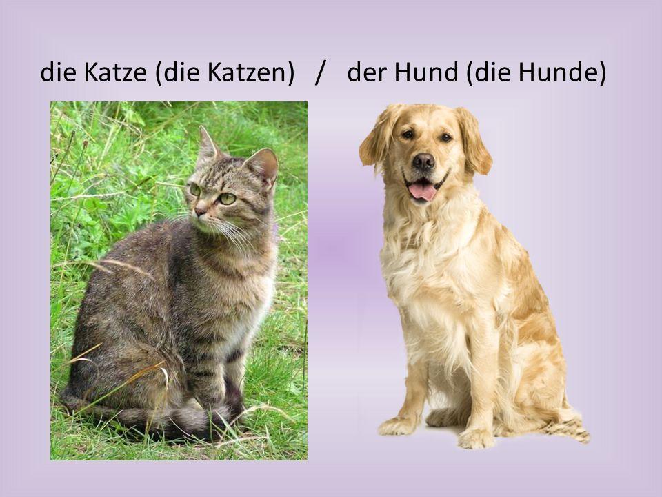 die Katze (die Katzen) / der Hund (die Hunde)
