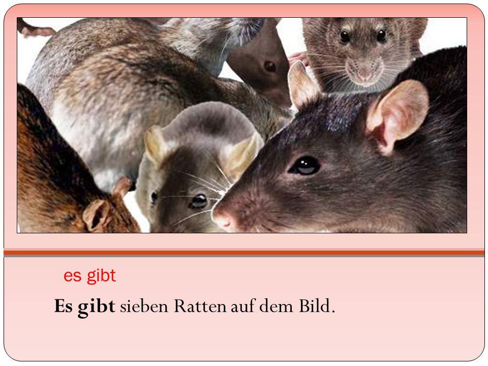 es gibt Es gibt sieben Ratten auf dem Bild.