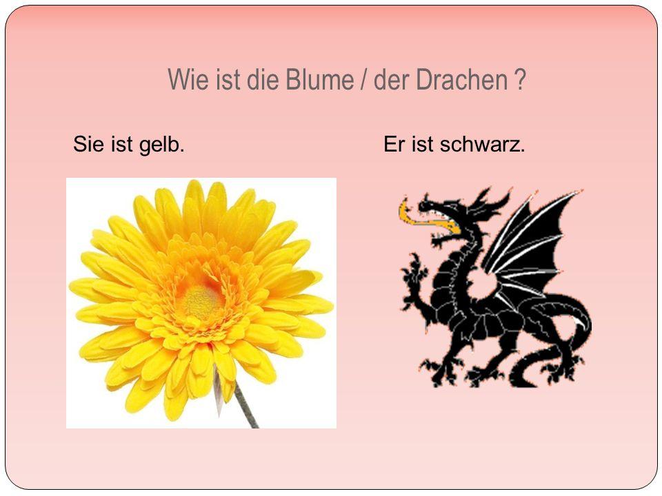 Wie ist die Blume / der Drachen Sie ist gelb. Er ist schwarz.