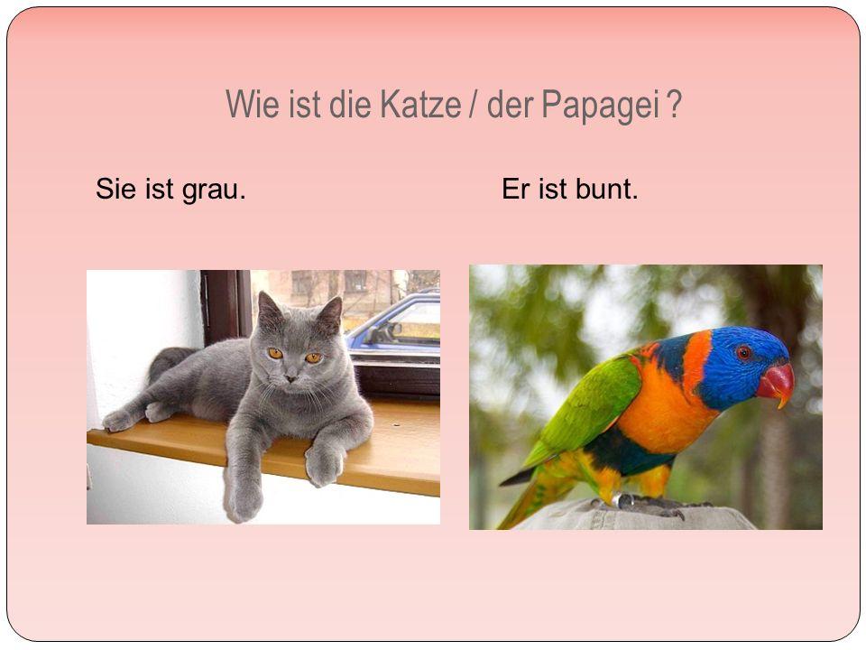 Wie ist die Katze / der Papagei Sie ist grau. Er ist bunt.