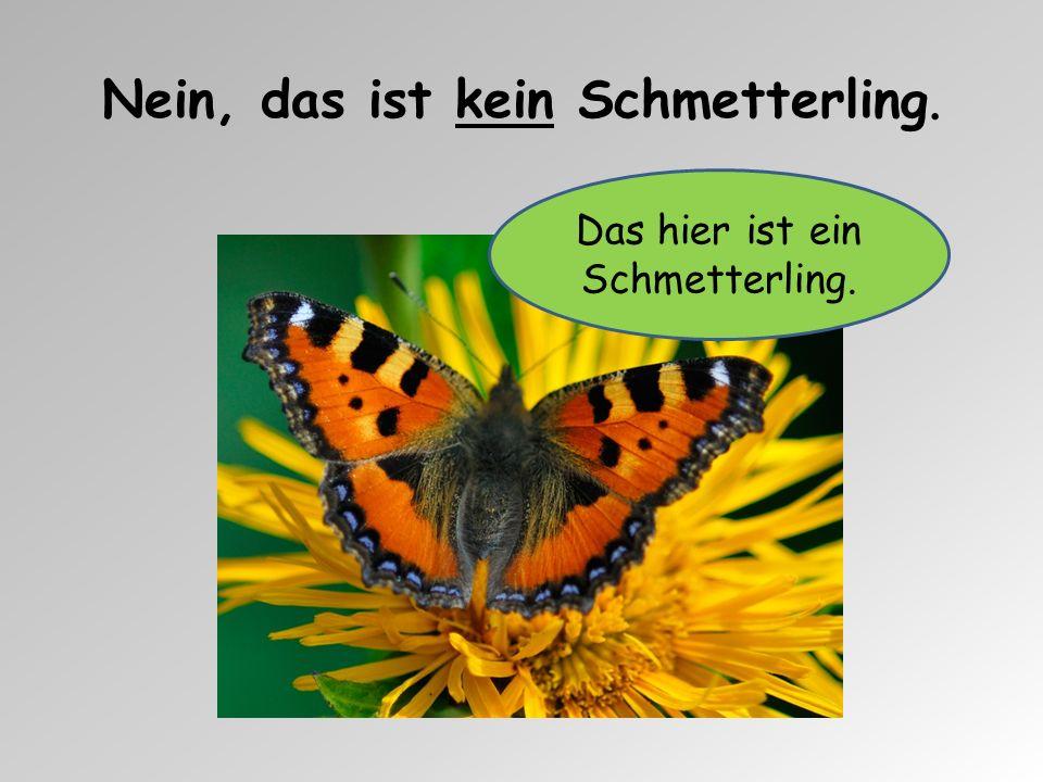 Nein, das ist kein Schmetterling. Das hier ist ein Schmetterling.