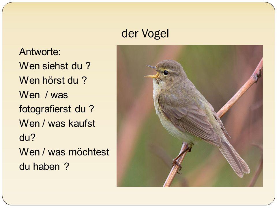 der Vogel Antworte: Wen siehst du ? Wen hörst du ? Wen / was fotografierst du ? Wen / was kaufst du? Wen / was möchtest du haben ?