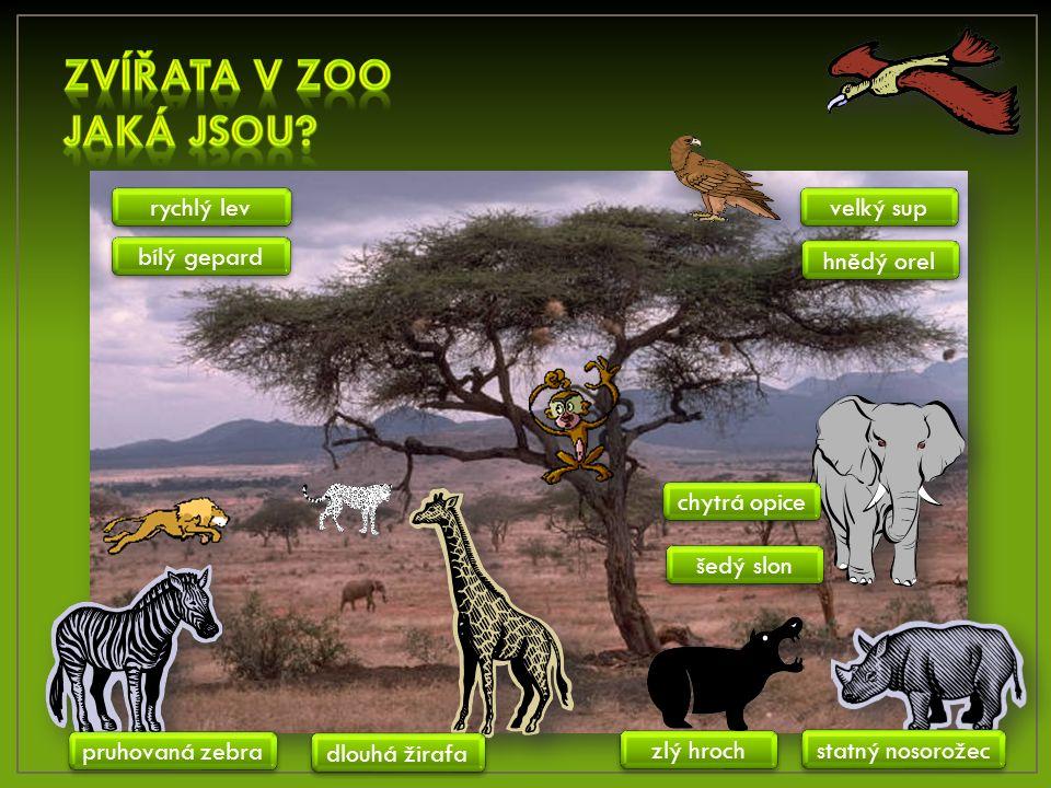 šedý slon velký sup rychlý lev bílý gepard chytrá opice dlouhá žirafa pruhovaná zebra zlý hroch statný nosorožec hnědý orel