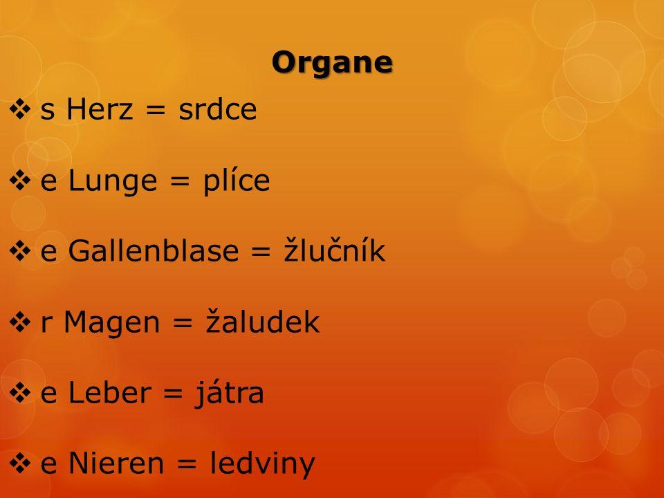  s Herz = srdce  e Lunge = plíce  e Gallenblase = žlučník  r Magen = žaludek  e Leber = játra  e Nieren = ledviny Organe