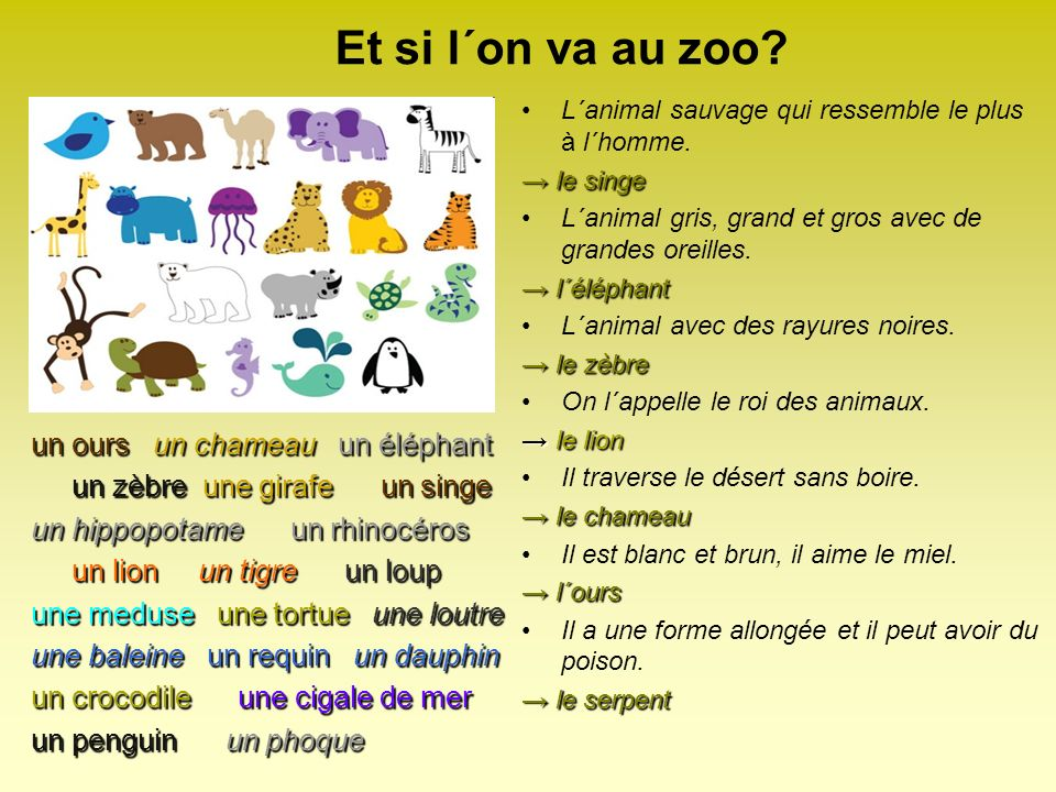 Et si l´on va au zoo.