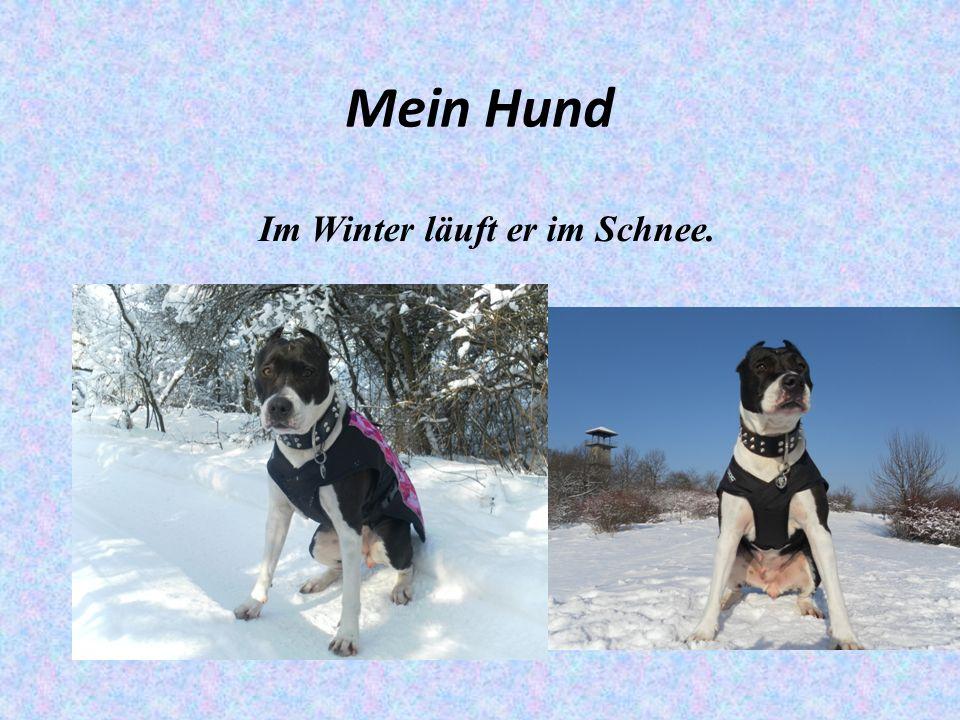 Mein Hund Im Winter läuft er im Schnee.