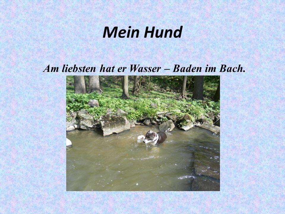 Mein Hund Am liebsten hat er Wasser – Baden im Bach.