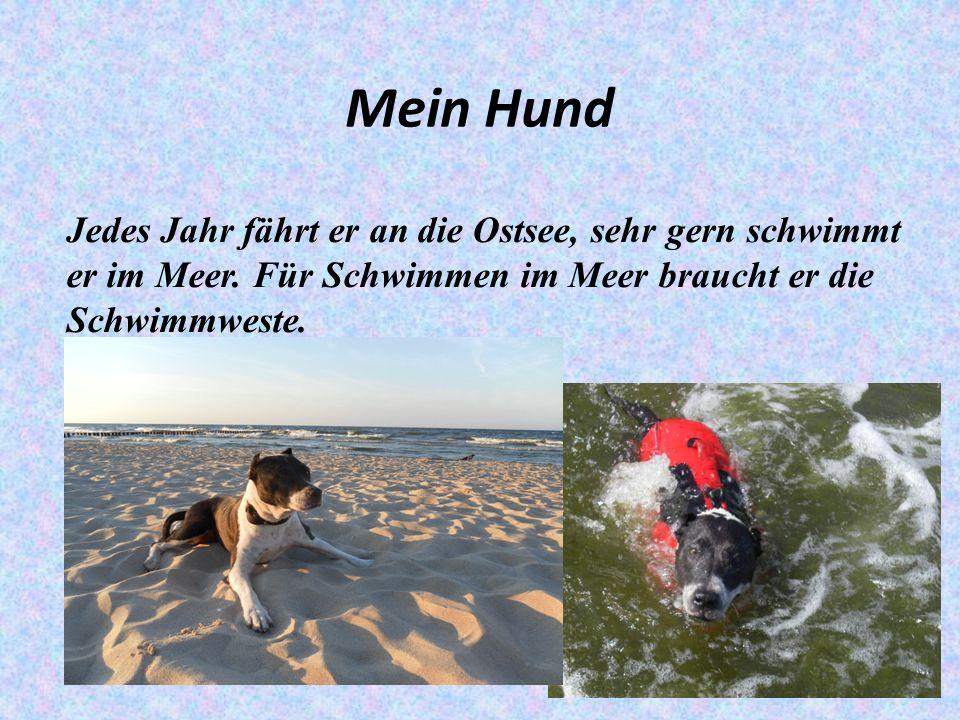 Mein Hund Jedes Jahr fährt er an die Ostsee, sehr gern schwimmt er im Meer.