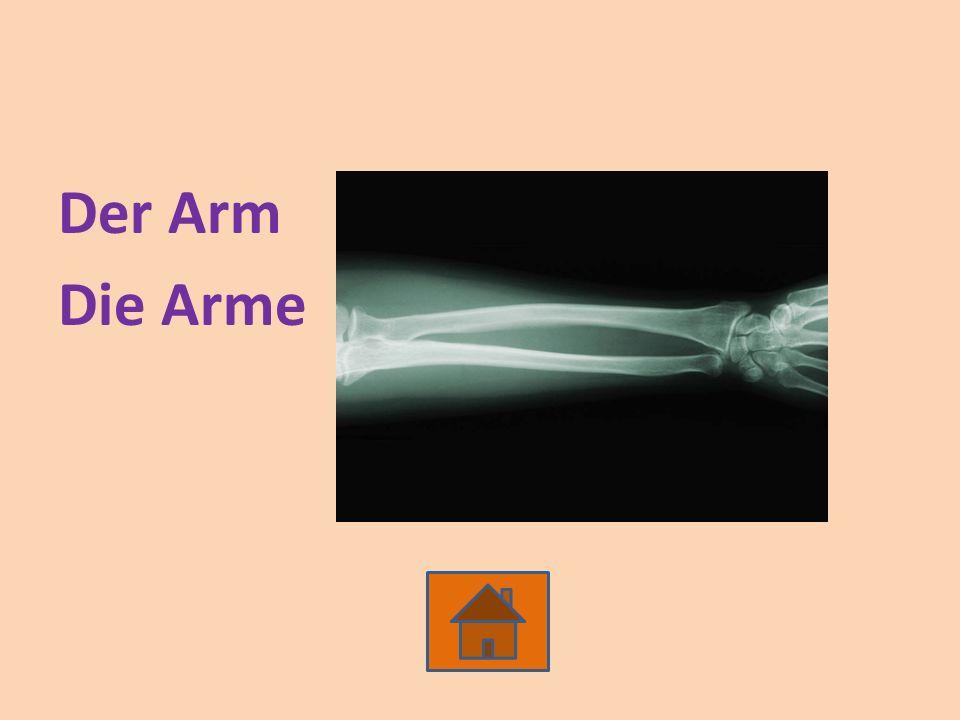 Der Arm Die Arme
