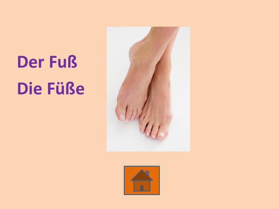 Der Fuß Die Füße