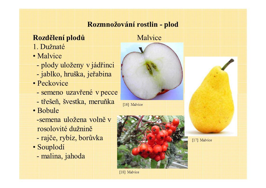 Rozmnožování rostlin - plod Rozdělení plodů 1. Dužnaté Malvice -plody uloženy v jádřinci -jablko, hruška, jeřabina Peckovice -semeno uzavřené v pecce