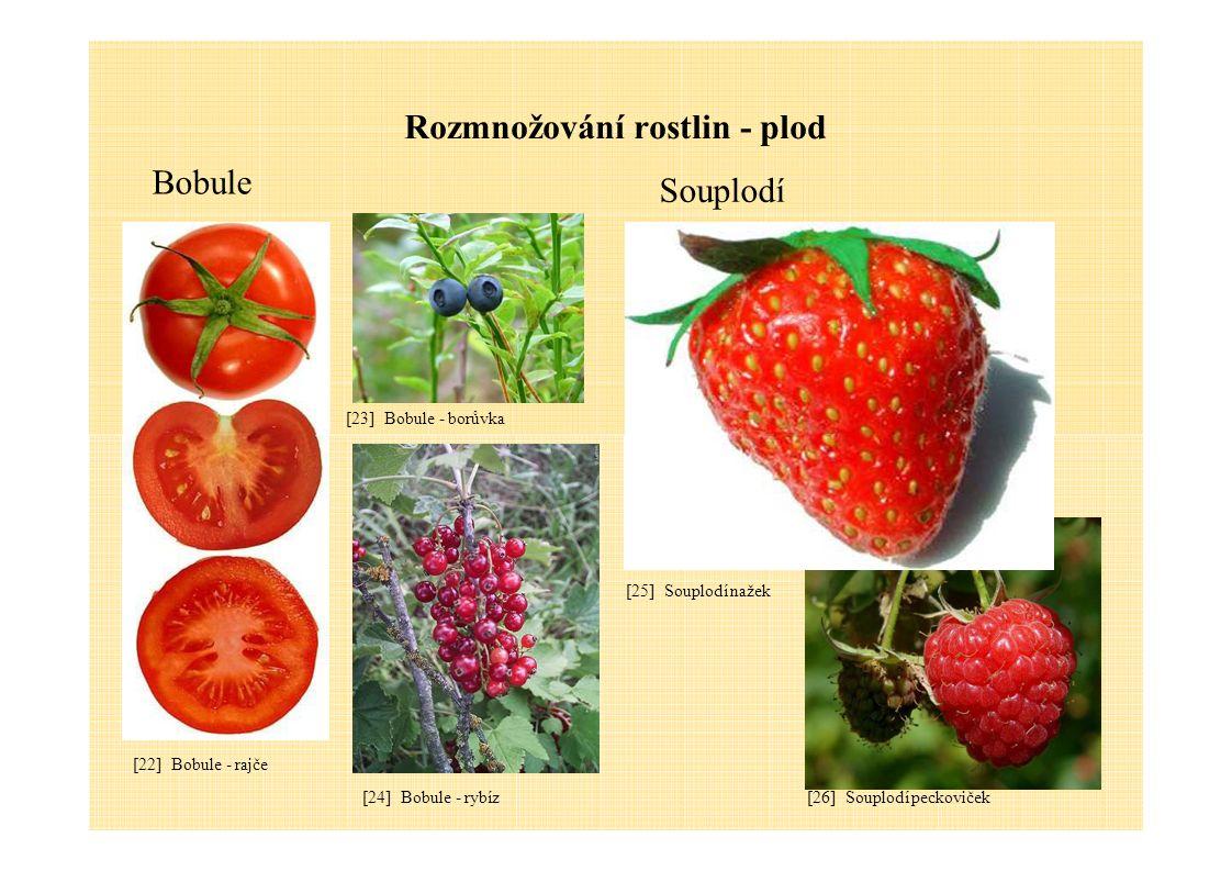 Rozmnožování rostlin - plod Bobule Souplodí [23] Bobule - borůvka [22] Bobule - rajče [26] Souplodí peckoviček [25] Souplodí nažek [24] Bobule - rybíz