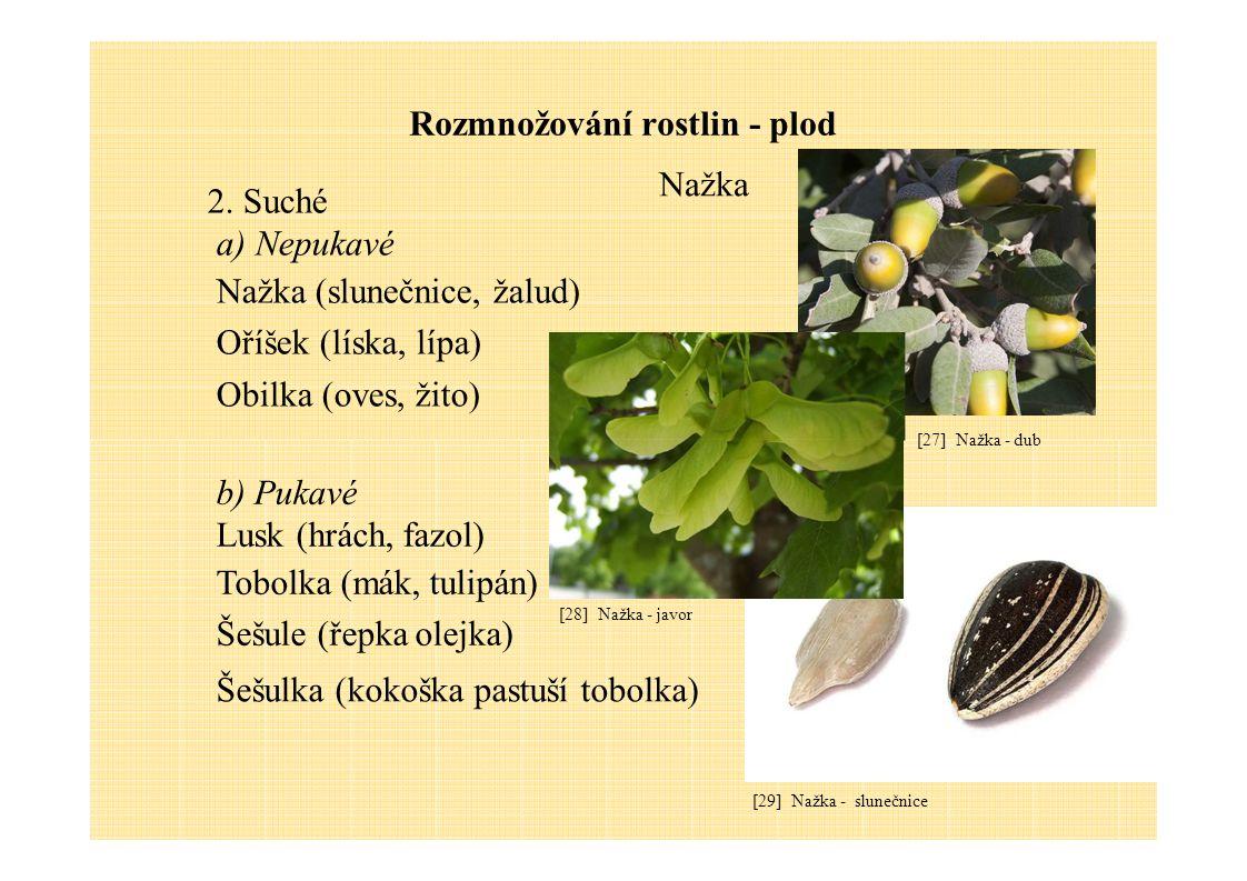 Rozmnožování rostlin - plod 2.Suché a)Nepukavé Nažka (slunečnice, žalud) Oříšek (líska, lípa) Obilka (oves, žito) Nažka b) Pukavé Lusk (hrách, fazol)