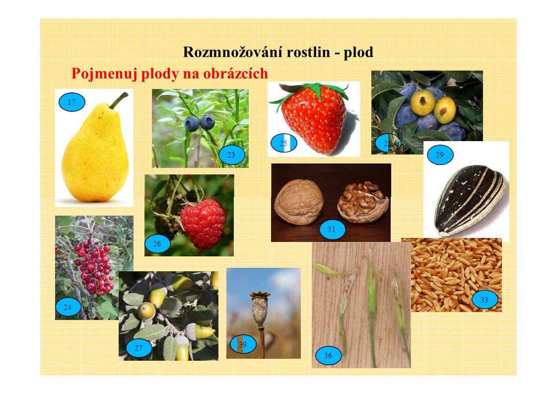 Rozmnožování rostlin - plod Pojmenuj plody na obrázcích 17 23 2125 29 26 24 33 31 27 39 36