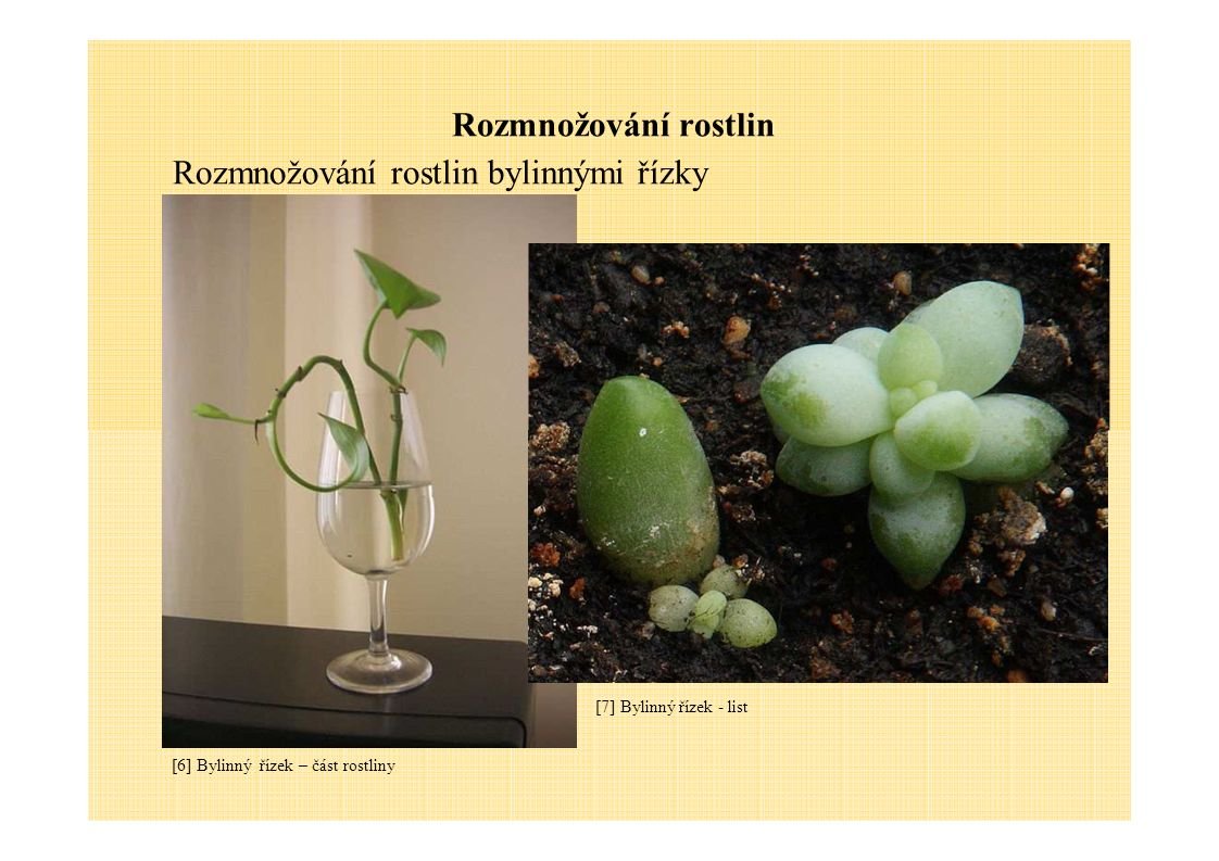Rozmnožování rostlin Rozmnožování rostlin dřevnatými stonky [8] Dřevnatý stonek - řízky Jaké dva základní způsoby rozmnožování rostlin znáš.