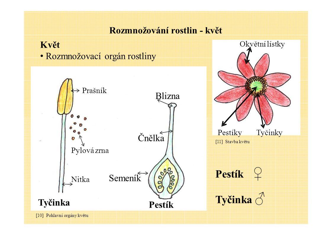 Rozmnožování rostlin - květ Květ Rozmnožovací orgán rostliny Prašník Blizna Okvětní lístky Tyčinka [10] Pohlavní orgány květu Nitka Pylová zrna Pestík