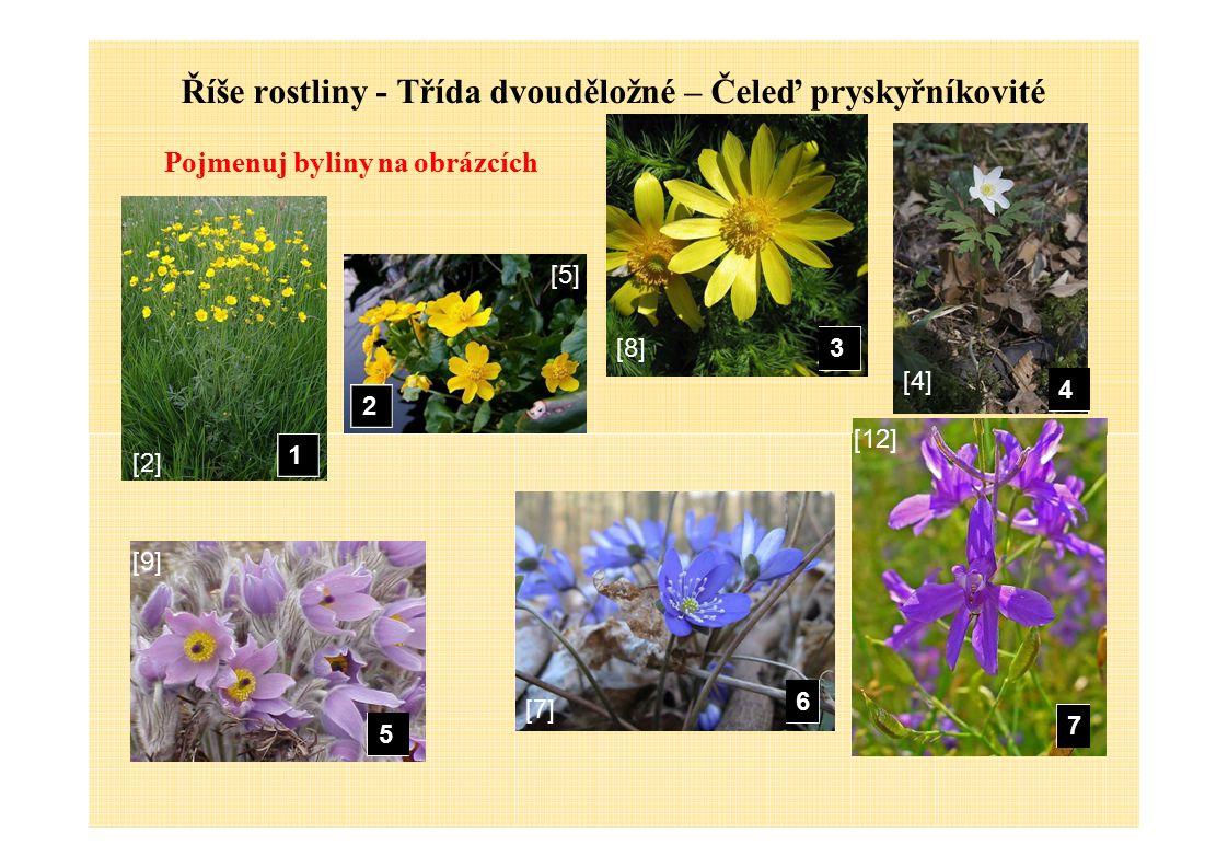 Říše rostliny - Třída dvouděložné – Čeleď pryskyřníkovité Pojmenuj byliny na obrázcích 2 3 4 [5][5] [8][8] [4][4] 1 5 6 7 [2][2] [9][9] [7][7] [12]