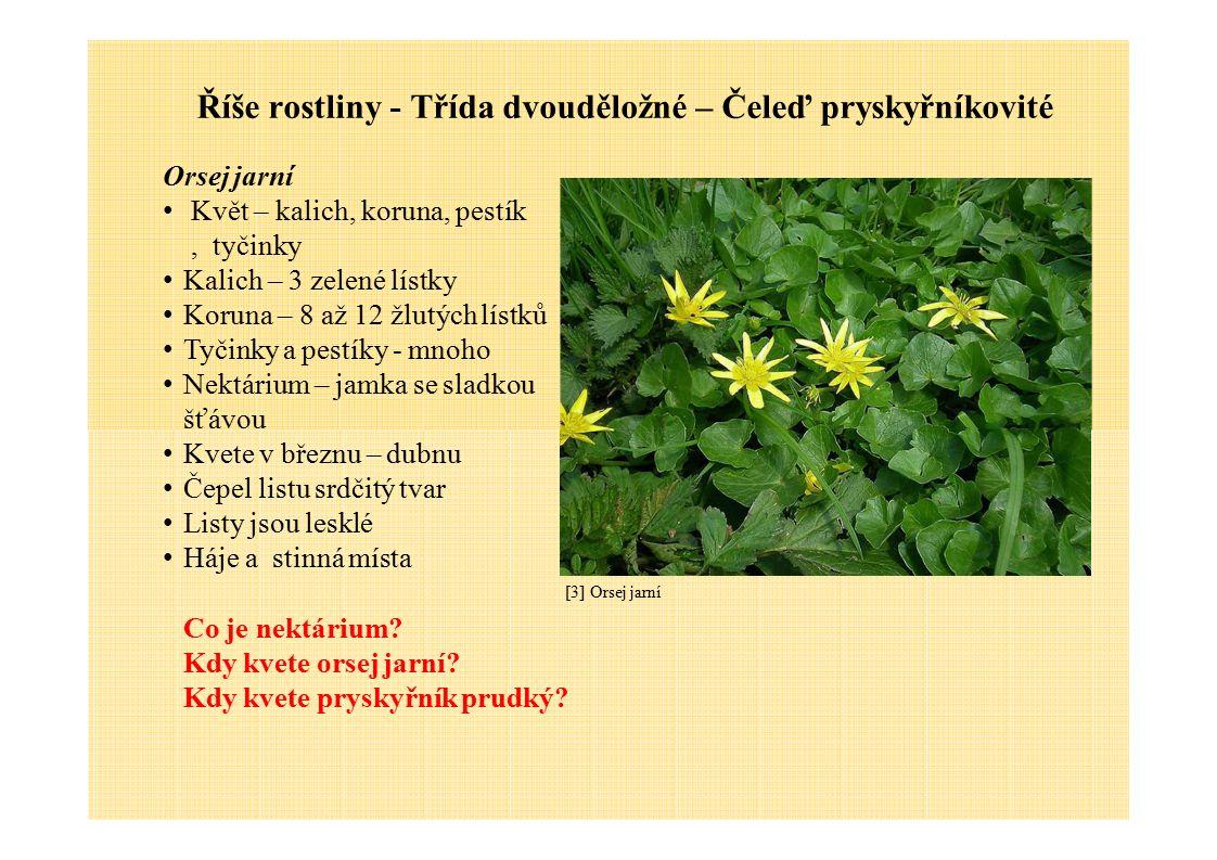 Říše rostliny - Třída dvouděložné – Čeleď pryskyřníkovité Orsej jarní Květ – kalich, koruna, pestík, tyčinky Kalich – 3 zelené lístky Koruna – 8 až 12