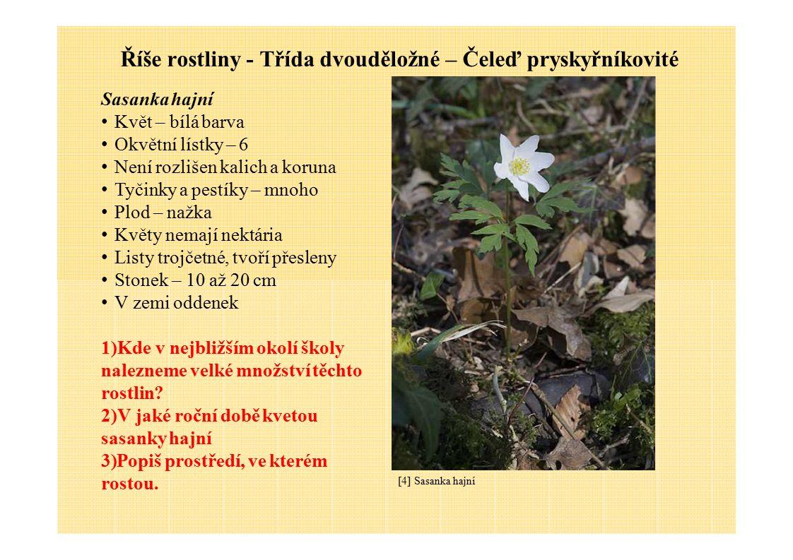 Říše rostliny - Třída dvouděložné – Čeleď pryskyřníkovité [4] Sasanka hajní Sasanka hajní Květ – bílá barva Okvětní lístky – 6 Není rozlišen kalich a