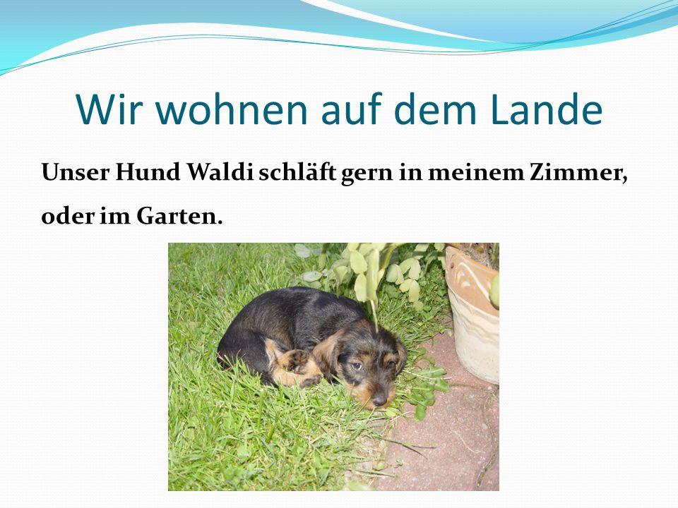 Wir wohnen auf dem Lande Unser Hund Waldi schläft gern in meinem Zimmer, oder im Garten.