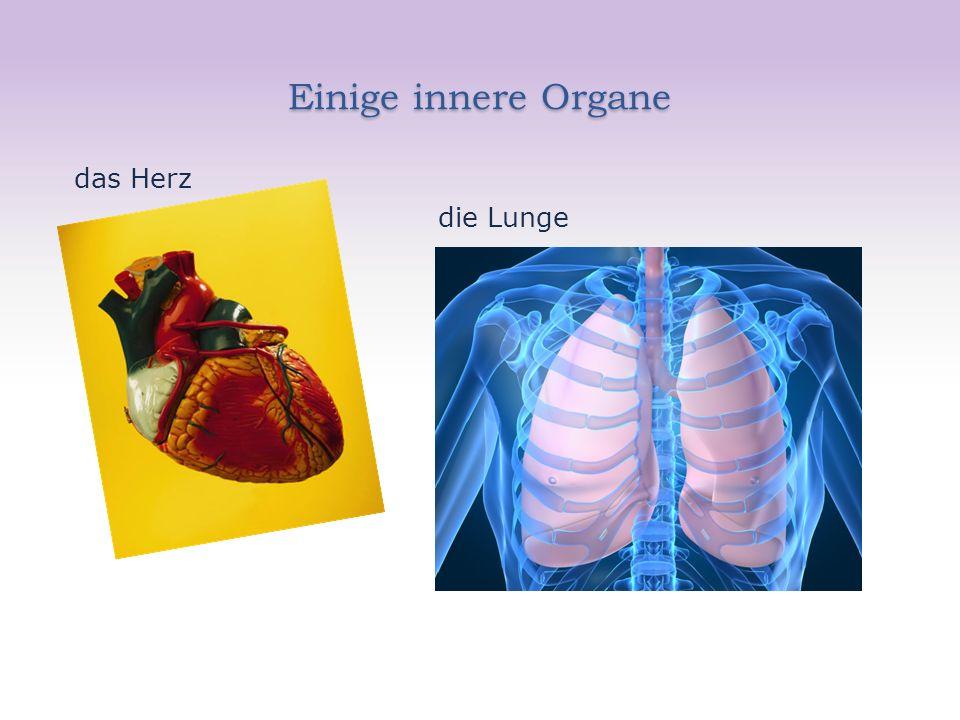 Einige innere Organe das Herz die Lunge
