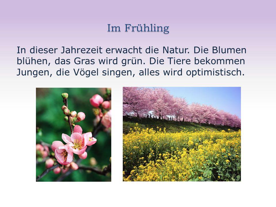 Im Frühling In dieser Jahrezeit erwacht die Natur.