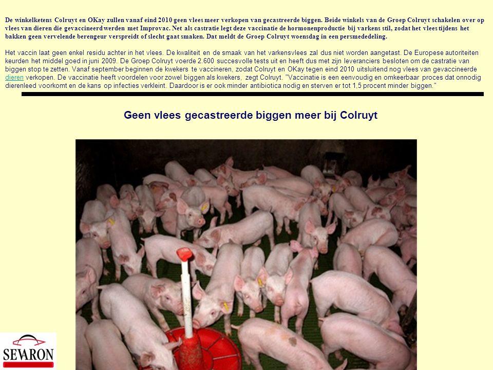 De winkelketens Colruyt en OKay zullen vanaf eind 2010 geen vlees meer verkopen van gecastreerde biggen. Beide winkels van de Groep Colruyt schakelen