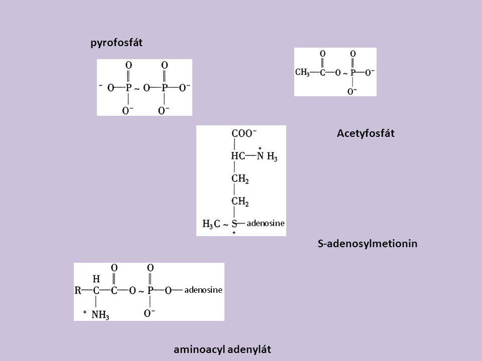 Acetyfosfát pyrofosfát S-adenosylmetionin aminoacyl adenylát