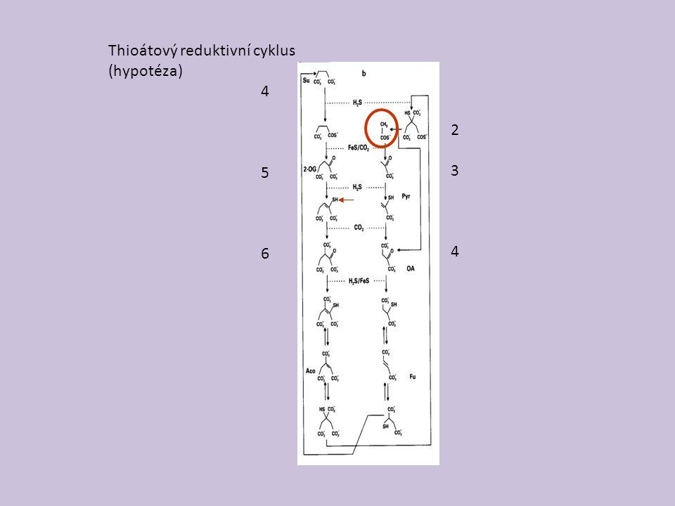 Thioátový reduktivní cyklus (hypotéza) 234234 456456