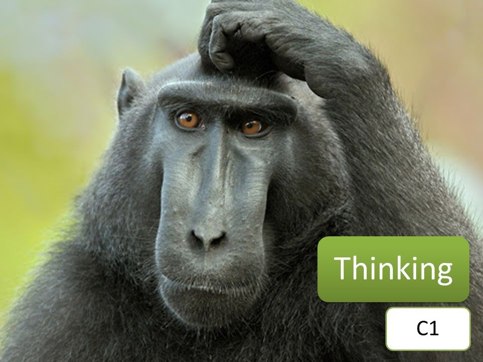 Thinking C1