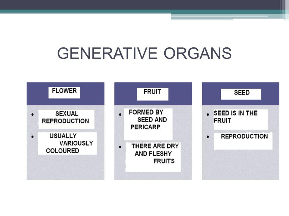 GENERATIVE ORGANS